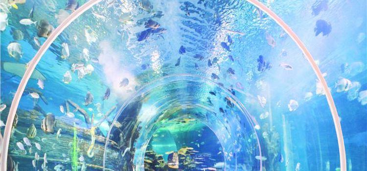 Linyi Ocean World Theme Park1