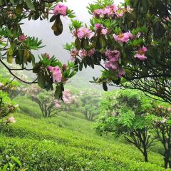 화딩 국가산림공원 여행 사진