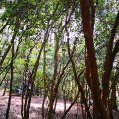 구이양 삼림공원 여행 사진