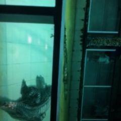 Phuket Zoo User Photo