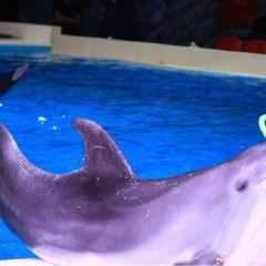 Dubai Dolphinarium User Photo