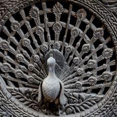 Peacock Window User Photo
