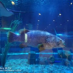 Haizhiyu Sea World User Photo