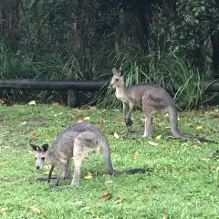 Coombabah Lakes Conservation Area User Photo