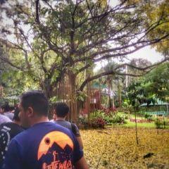 Philippine Eagle Centre User Photo