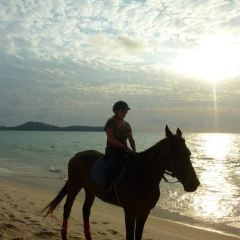 Phuket International Horse Club User Photo