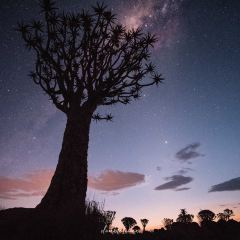Quiver Tree Forest User Photo