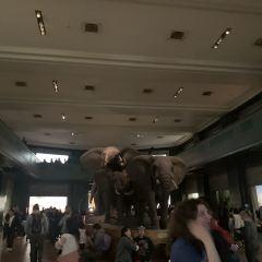 미국 자연사 박물관 여행 사진