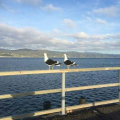 Petone Foreshore User Photo