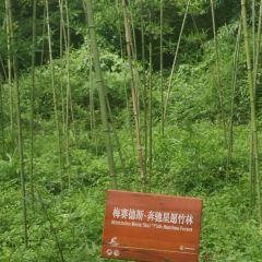 중국 자이언트판다 보호연구센터, 두장옌기지 여행 사진