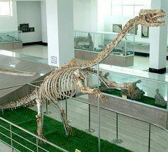 Shandong Tianyu Museum of Natural History User Photo