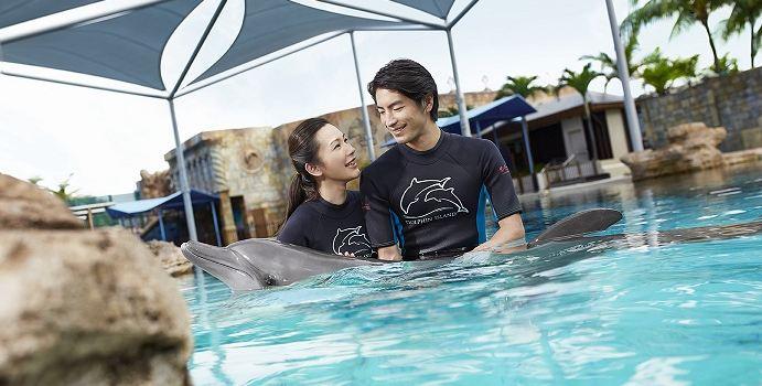 Dolphin Island1