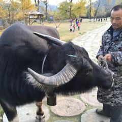 中國千年銀杏谷用戶圖片