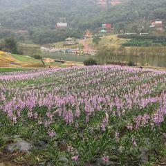 Qingxi Valley Tourist Area • Huatian Wineland Scenic Area User Photo