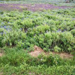 Shixiang Sea of Flowers User Photo