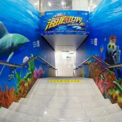 青島海底世界用戶圖片