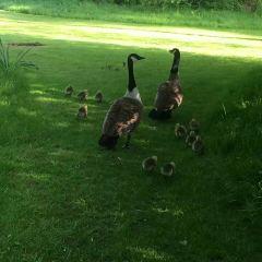 Oxford University Parks User Photo