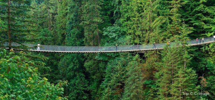 Capilano Suspension Bridge Park3