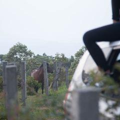 The Xuehuang Grassland  User Photo