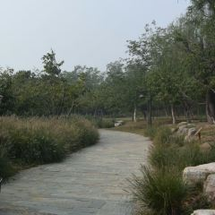 Grand Canal Forest Park User Photo