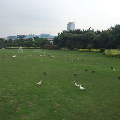 鴿子廣場用戶圖片