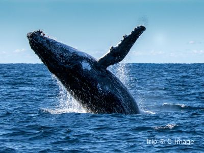 Jervis Bay Whale Watching Cruise