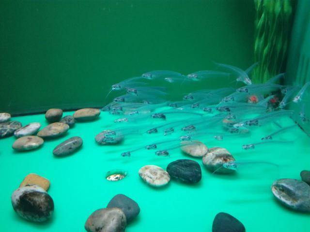 칭다오 해저세계