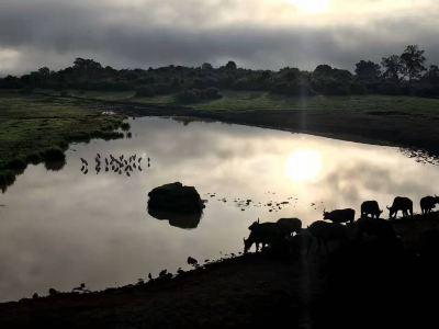 蒙巴薩野生動物園