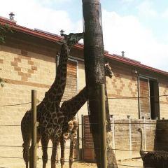 휴스턴 동물원 여행 사진