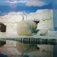 다롄 라오후탄 해양생물관 여행 사진