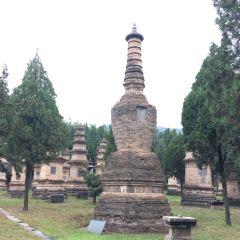 少林寺碑林用戶圖片