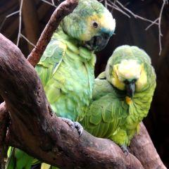 Chimelong Bird Park User Photo
