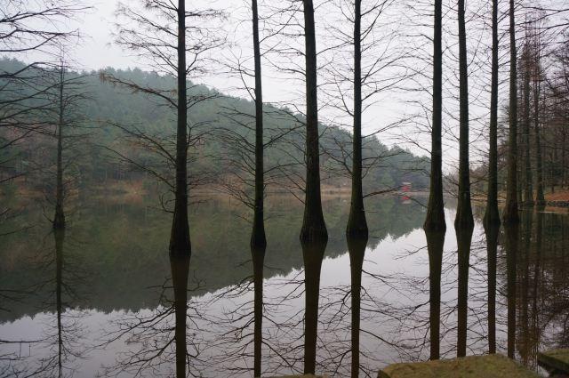 쓰밍산 국립삼림공원