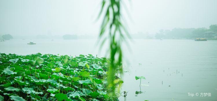 大明湖景區3