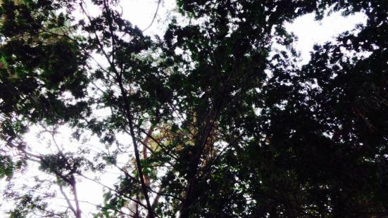 常綠針葉林