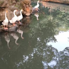 鵝池用戶圖片