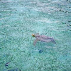 卡帕萊島用戶圖片