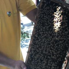 꿀벌농장 여행 사진