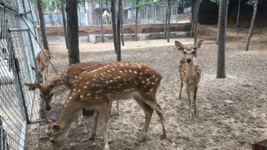Xingrun Forest Zoo