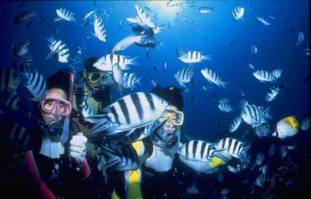一路潛行,與魚共舞