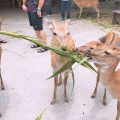 鹿境梅花鹿生態園用戶圖片