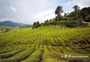 英國人最喜歡的馬來西亞度假地—金馬倫高原