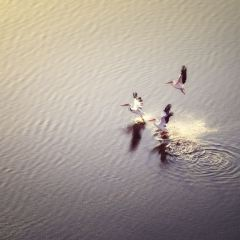 查拉湖用戶圖片
