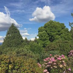 Queen Elizabeth Park User Photo