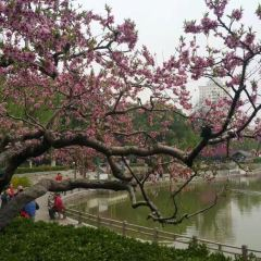 쯔징산공원 여행 사진