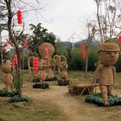 五彩田園農業嘉年華用戶圖片