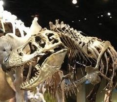 Perot Museum of Nature and Science User Photo