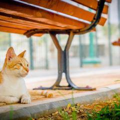 HaTachana User Photo