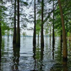 天目湖用戶圖片