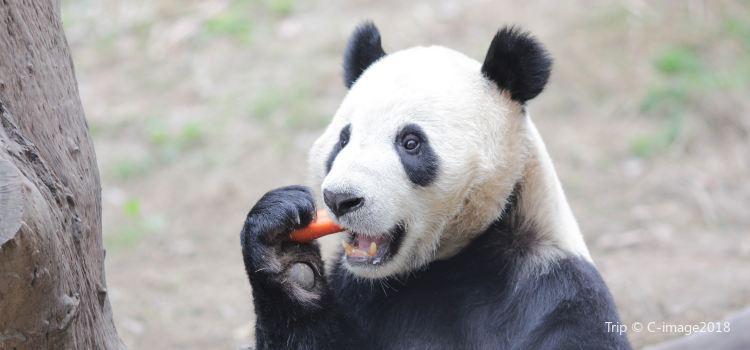 深圳野生動物園2